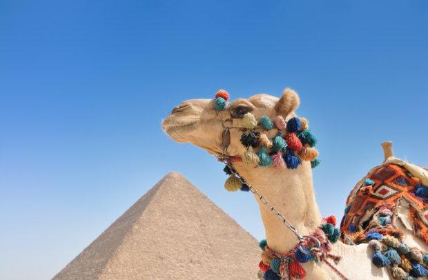 Ägypten Kamel und Pyramide