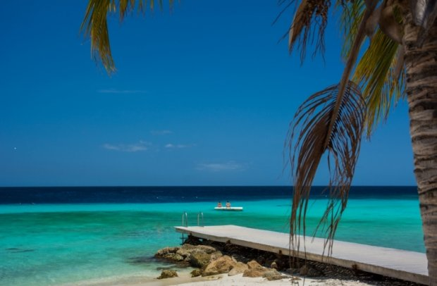 Karibik Palme
