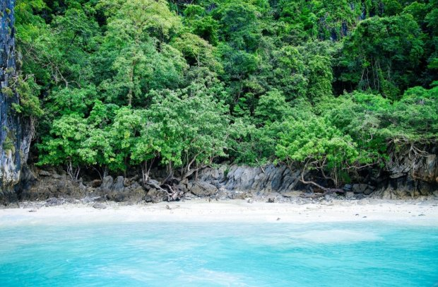 Karibik Tropendschungel