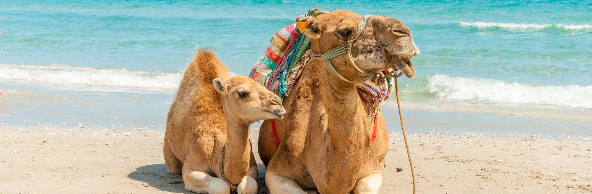 Familienhotels in Tunesien