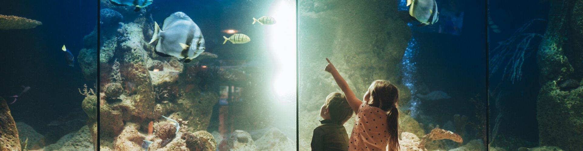 Ausflugsziel Aquarium Palma