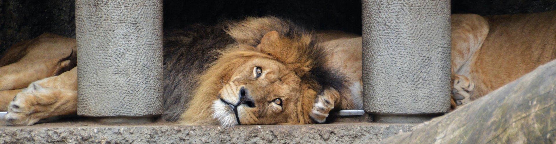 Ausflugsziel Artis Zoo
