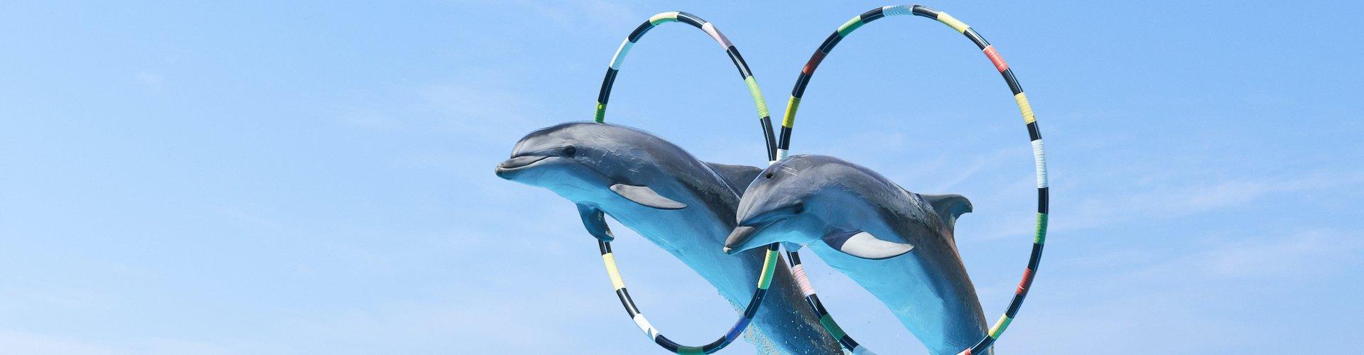 Ausflugsziel Delfinario de Cienfuegos