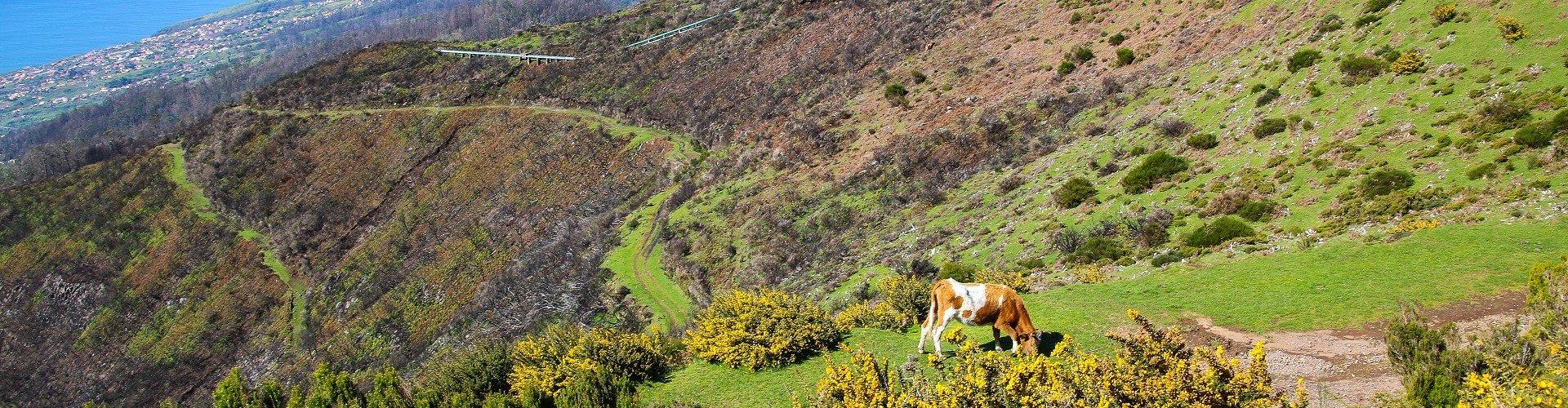 Ausflugsziel Hochmoor Paul da Serra