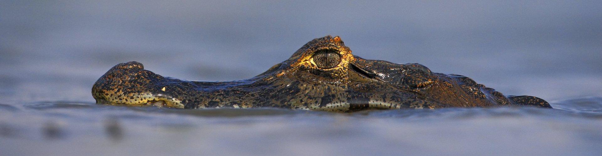 Ausflugsziel Krokodilpark Torremolinos