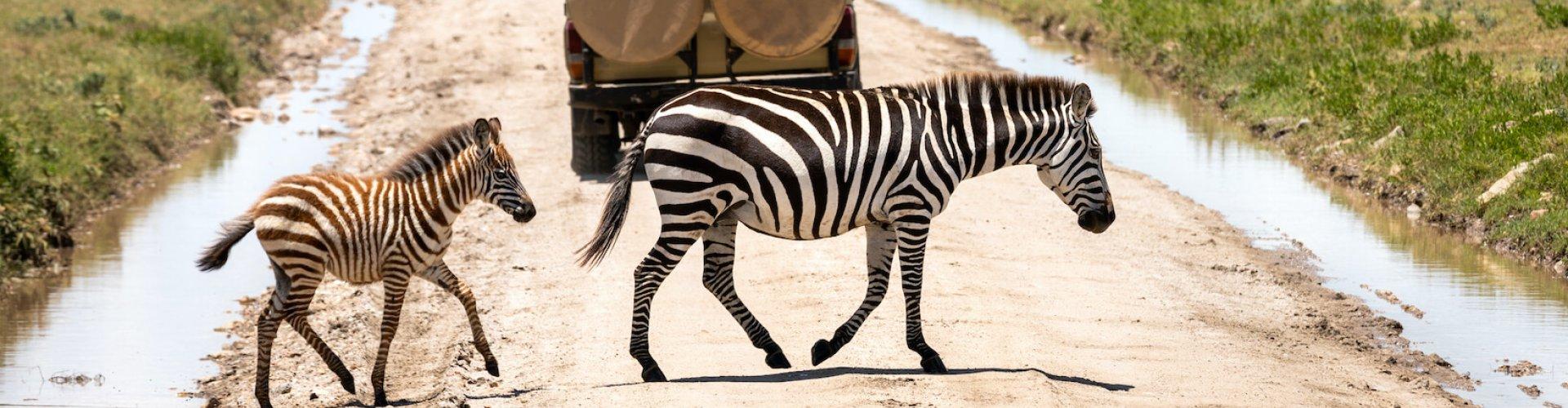 Ausflugsziel Safari Zoo