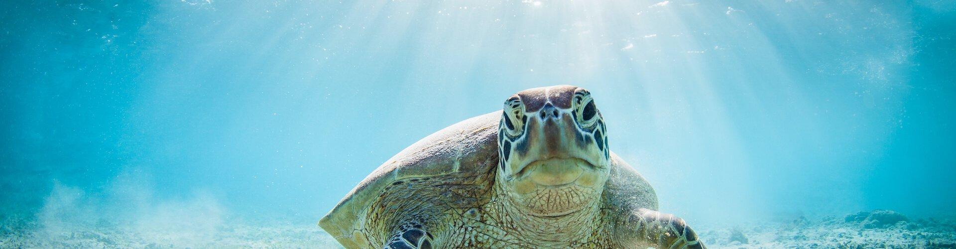 Ausflugsziel Sea Life Benalmadena