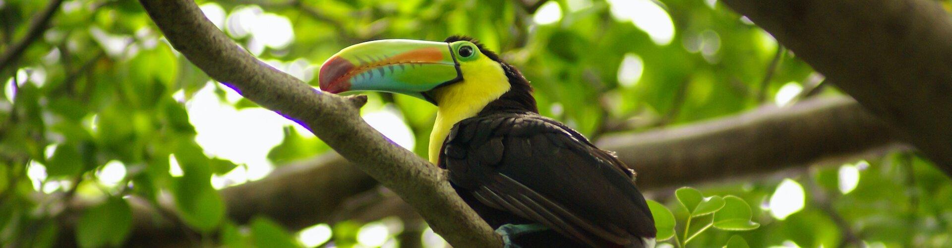 Ausflugsziel Vogelpark Avifauna