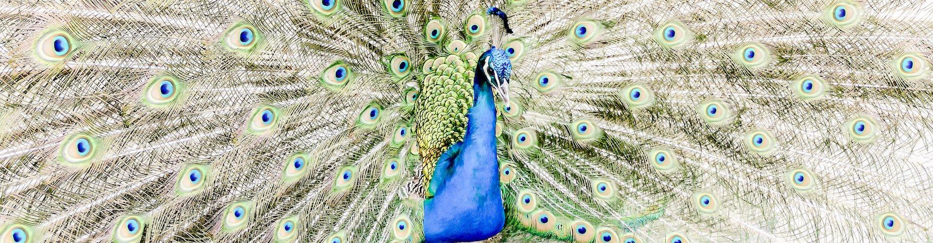 Ausflugsziel Zoologischer Garten Lissabon
