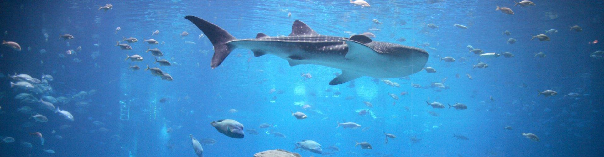 Ausflugsziel Aquarium Barcelona