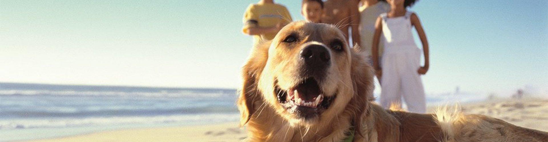 Familienurlaub mit Hund
