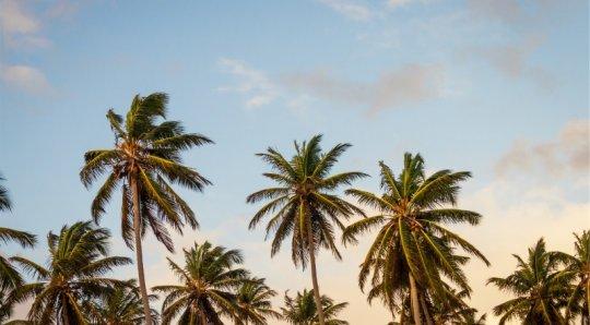 Am besten hawaii Dating-Seiten
