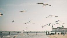 Ostsee mit Kindern Usedom