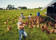 Familienurlaub auf dem Bauernhof Hühner