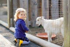 Familienurlaub auf dem Bauernhof Streichelzoo