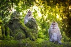 Fernreiseziele für Familien Indonesien Bali