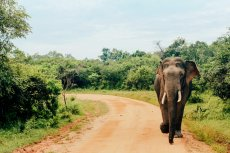 Fernreiseziele für Familien Sri Lanka