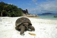 Fernreiseziele für Familien Seychellen