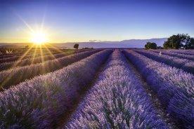 EM 2021 Lavendel Provence