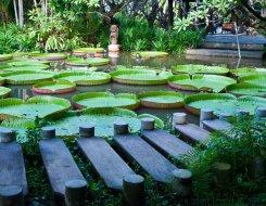 botanischergarten