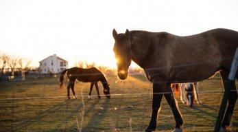 Ferienhäuser für Pferdeliebhaber