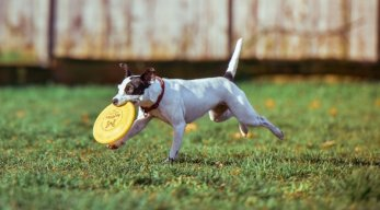 Familienurlaub mit Hund im Ferienhaus